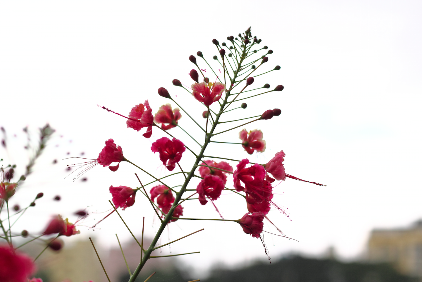 cropped-prettyflowers.png