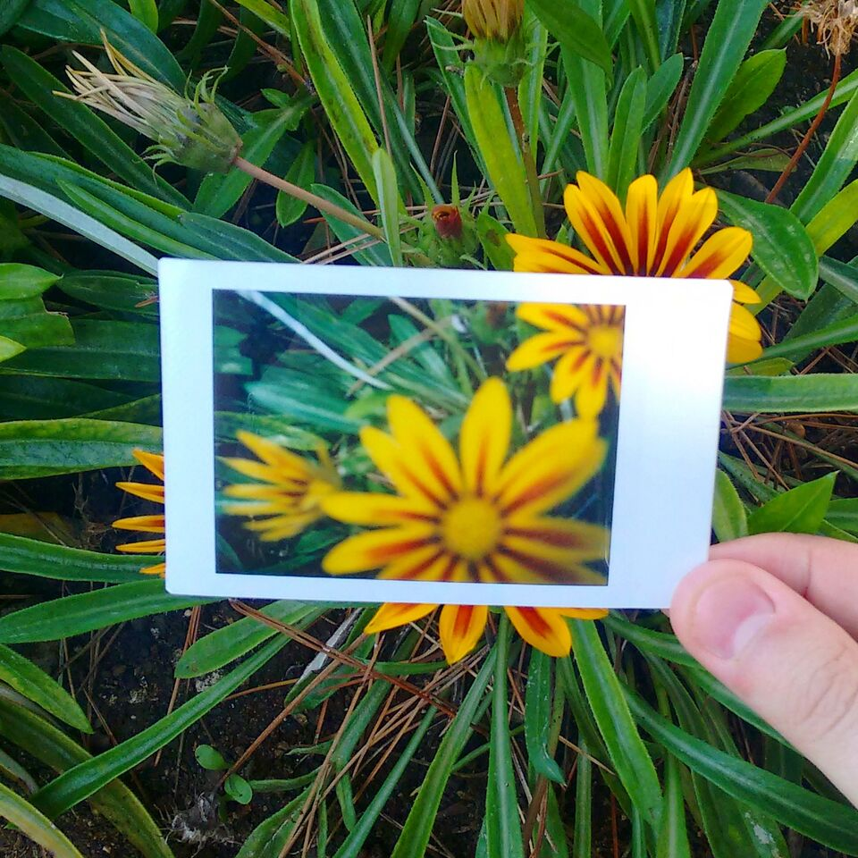 Creative Instant Photography with Kate - an interview via Opinion9